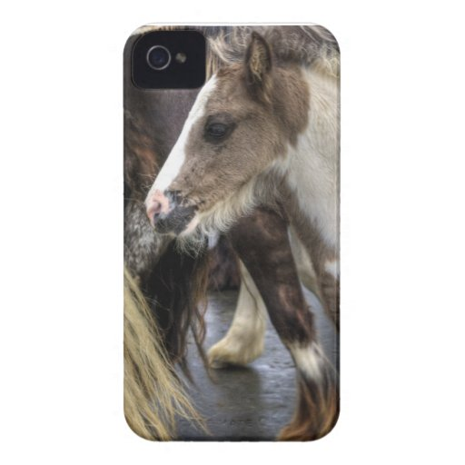 Foal at the Appleby Horse Fair iPhone 4 Case