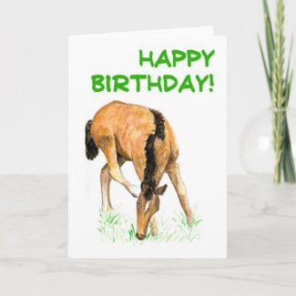 'Foal' Birthday Card card