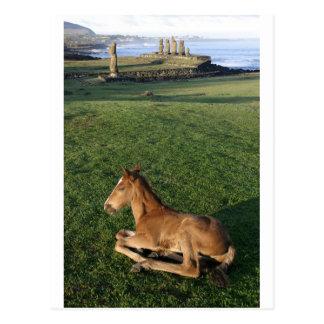 Foal Easter Island (Rapa Nui). Postcard