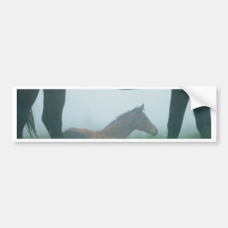Foal Framed by its Mother Bumper Sticker