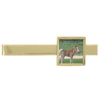 Foal Gold Finish Tie Clip