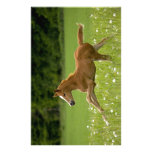 Foal in the gallopp (Trakehner) Personalized Stationery