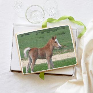Foal Jumbo Shortbread Cookie