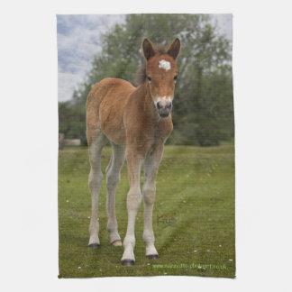 Foal Kitchen Towel