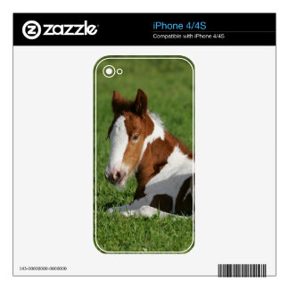 Foal Laying in Grass iPhone 4S Decal