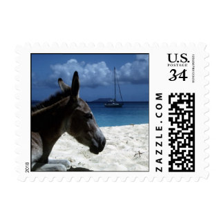 Foal on the Beach Postage