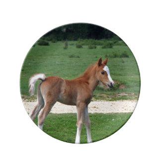 Foal Plate