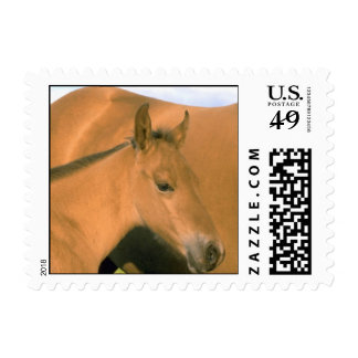 Foal Postage