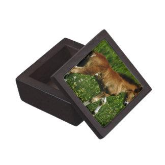 Foal Premium Gift Box