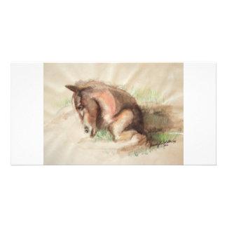 Foal Relaxing Customized Photo Card