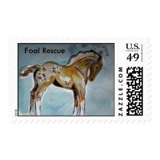 Foal RescuePhoto 5279, Foal Rescue Stamp