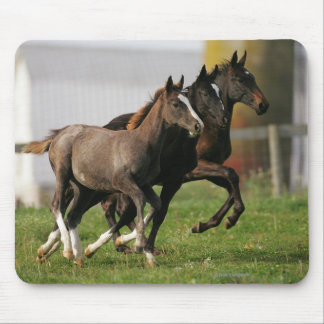 Foal Running Mouse Pad