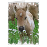 Foal Smelling Daisies Greeting Card