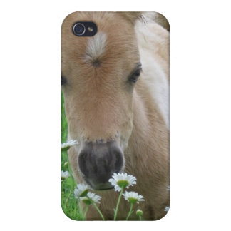 Foal Smelling Daisies iPhone Case iPhone 4 Cases