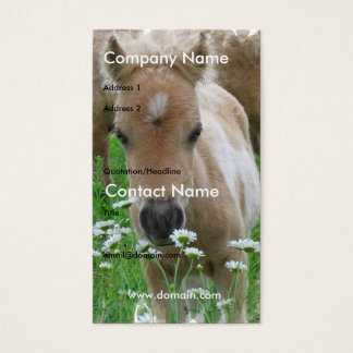 Foal Smelling Daisies on Business Card