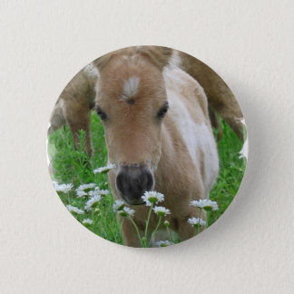 Foal Smelling Daisies Round Button