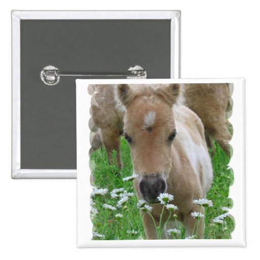Foal Smelling Daisies Square Pin