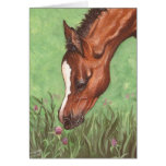 Foal Sniffing Clover Greeting Cards