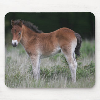Foal Standing Mouse Pad