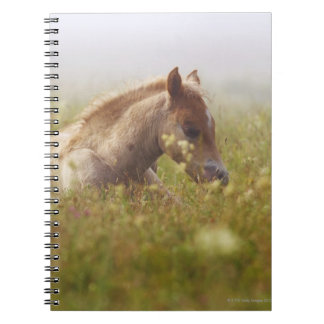 Foal wildflower meadow morning mist Piano Grande Notebook