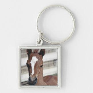 Foal with Blaze Keychain