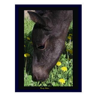 Foal's First Taste Postcard