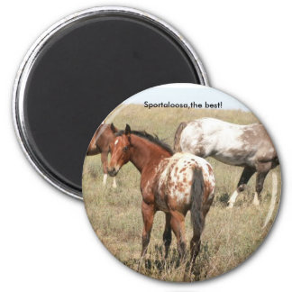 foals magnet