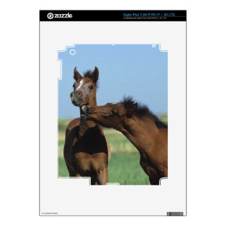 Foals Playing 2 Decal For iPad 3