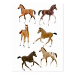 Foals Post Card