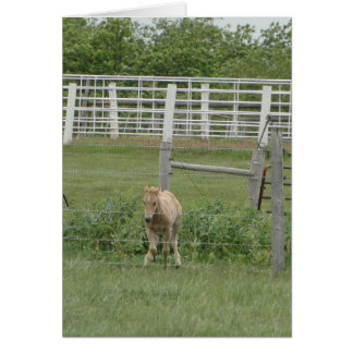 Foals:Spring Stationery Note Card