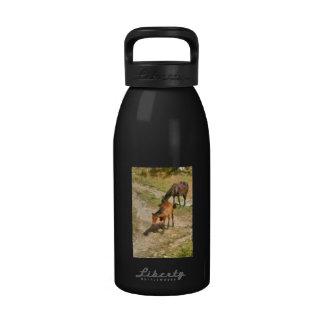 Foals Drinking Bottle