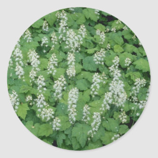 Foamflower (Tiarella Cordifolia) flowers Classic Round Sticker