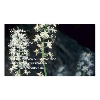 Foamflower (Tiarella Cordifolia) flowers Double-Sided Standard Business Cards (Pack Of 100)