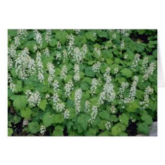 Foamflower (Tiarella Cordifolia) flowers Greeting Card