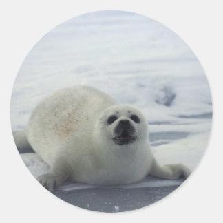 Foca de Groenlandia en el hielo Pegatina Redonda