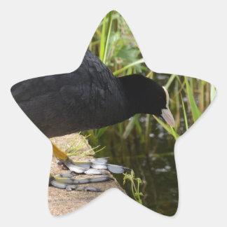 Focha Calcomanías Forma De Estrellaes Personalizadas