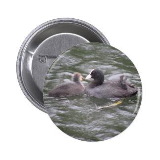 Focha que alimenta el botón hambriento del polluel pin redondo de 2 pulgadas