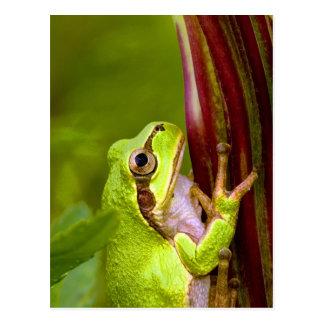 foco en meta y la rana arbórea del éxito postales