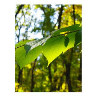 Foco selectivo en la rama de un árbol con grande postales
