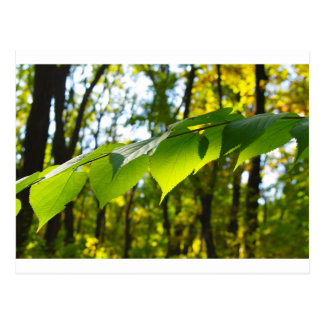 Foco selectivo en la rama de un árbol con grande tarjeta postal