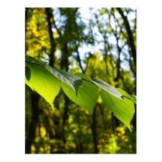 Foco selectivo en la rama de un árbol con grande tarjetas postales