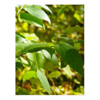 Foco selectivo en la rama de un primer del árbol postal