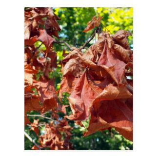 Foco selectivo en rama del arce con las hojas tarjetas postales