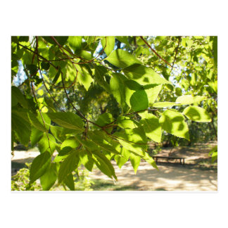 Foco selectivo en una rama joven de un árbol con l postal