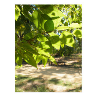 Foco selectivo en una rama joven de un árbol con l postales