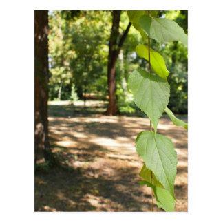 Foco selectivo en una rama joven de un árbol con l tarjeta postal