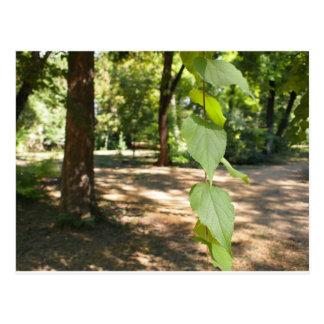 Foco selectivo en una rama joven de un árbol con l tarjetas postales