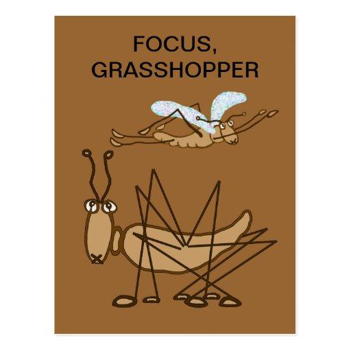 FOCUS GRASSHOPPER POST CARDS