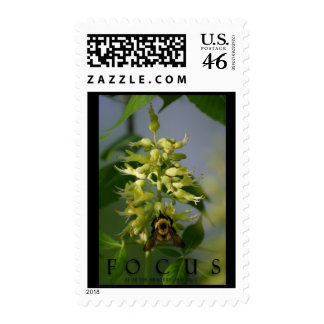 Focus Inspirational Message Art USPS Postage Stamp