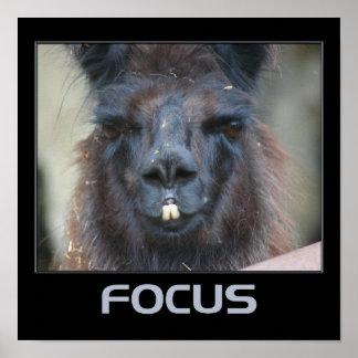 Focus Motivational Poster Intense Llama